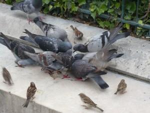 ノートルダム大聖堂付近の鳥2