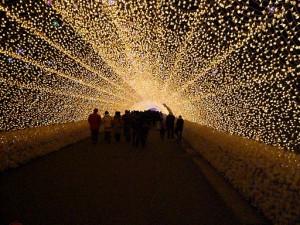 なばなの里2012-2013 光の回廊2