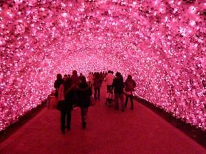 なばなの里2012-2013 河津桜のトンネル2
