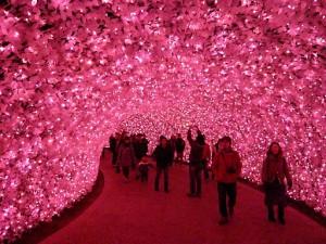 なばなの里2012-2013 河津桜のトンネル3