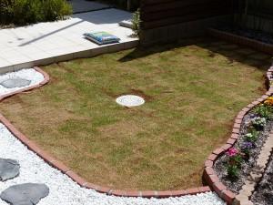 芝生を植えて3週間-2