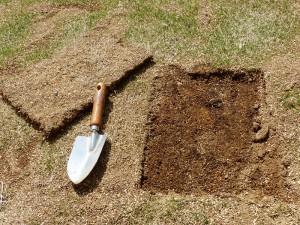 部分的に芝生を張替え1