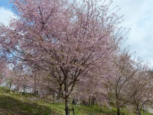 東山植物園6