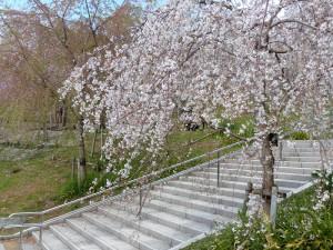 東山植物園12