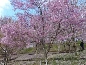 東山植物園13