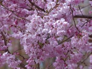 東山植物園14