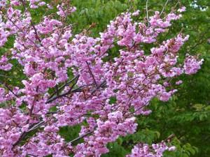 東山植物園15