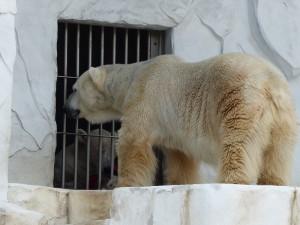 東山動物園6