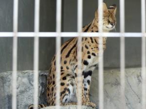 東山動物園10