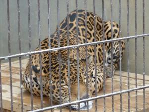 東山動物園11