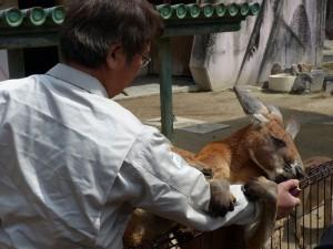 東山動物園12