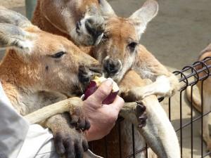東山動物園13