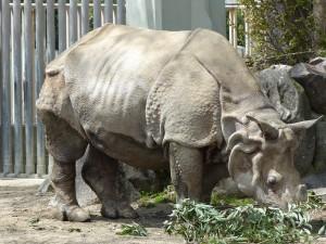 東山動物園18