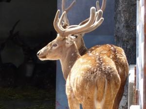 東山動物園19