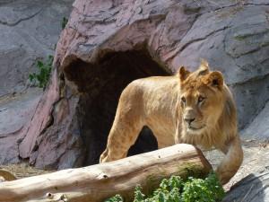 東山動物園21