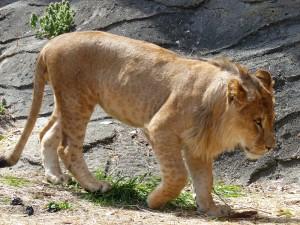 東山動物園22