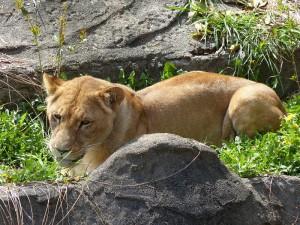 東山動物園23
