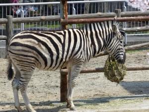 東山動物園24
