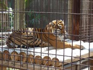 東山動物園25