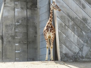 東山動物園27
