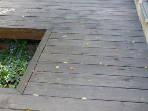 シマトネリコ落葉しまくり
