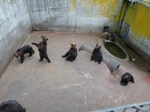 昭和新山熊牧場2