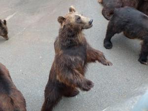 昭和新山熊牧場3