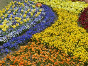 春のお花2