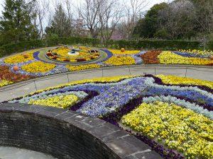 春のお花5