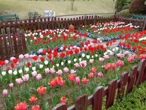 春のお花8