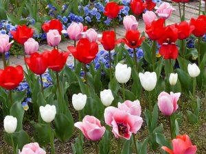 春のお花9
